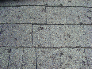Extreme Hail Damage to Composition Shingles