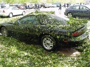 Hail Damage by shredding leaves off trees